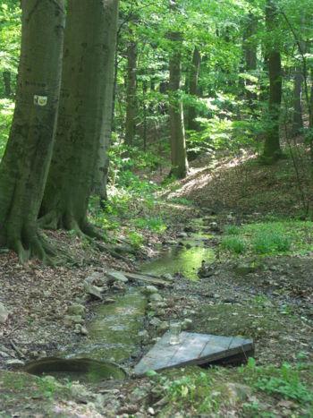 Izvori, potoci i rijeke - Page 6 Pramen_rtwood